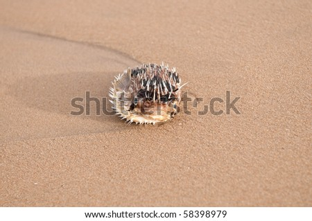 a fish lying dead at the beach due to pollution - stock photo