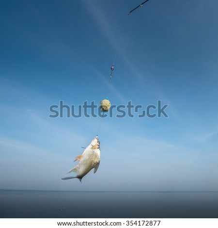A fish rises to the bait with blue sky background - stock photo