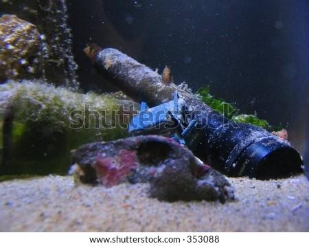 A flashlight provdes a home for a fish at the Oregon Coast Aquarium. - stock photo