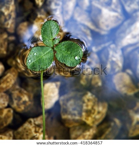 A floating clover - stock photo