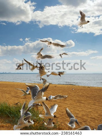 a flock of birds flying up on the sandy sea coast, against a blue sky with clouds - stock photo