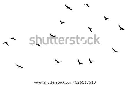 a flock of birds on a white background - stock photo