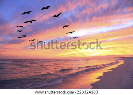 A Flock of Brown Pelicans Fly Over the Beach as the Sun Sets - stock photo