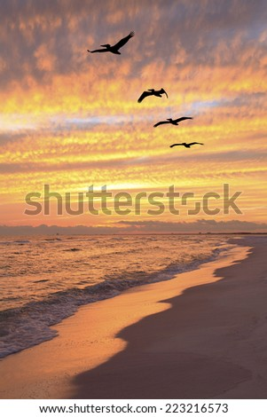 A Flock of Brown Pelicans Fly Over the Beach at Sunset - stock photo