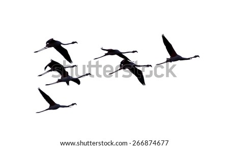 A flock of flamingos flying over the coast of the ocean in Namibia - South Africa - stock photo