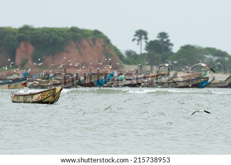 A flock of sanderlings flying in front of an colorful African fishing fleet - stock photo