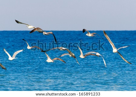 A flock of seagulls flying above the sea. - stock photo