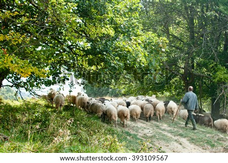 a flock of sheep in the pasture in Carpathians - stock photo