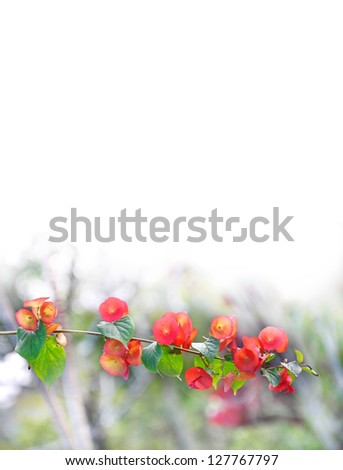 a flower background - stock photo