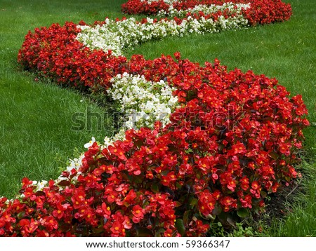 a flowerbed as linea from flowers - stock photo