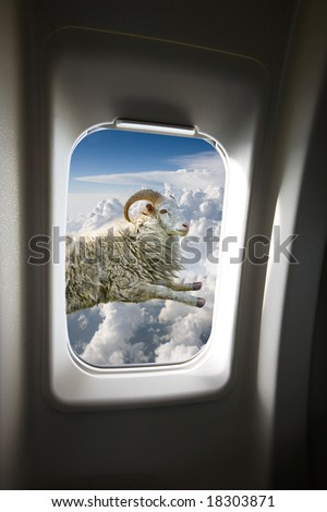 A flying sheep outside a plane window - stock photo