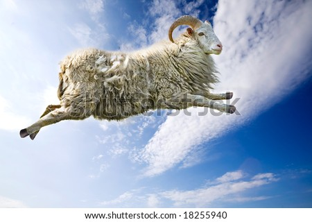 A flying sheep through a beautiful blue sky - stock photo