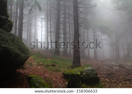 A foggy forest in the bavarian mountains in autumn - stock photo