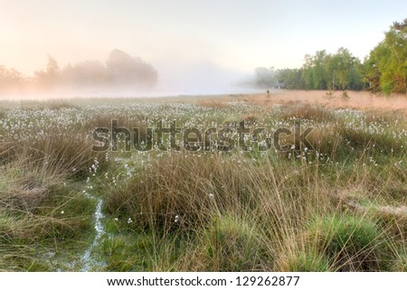 A foggy morning on a fen in spring - stock photo