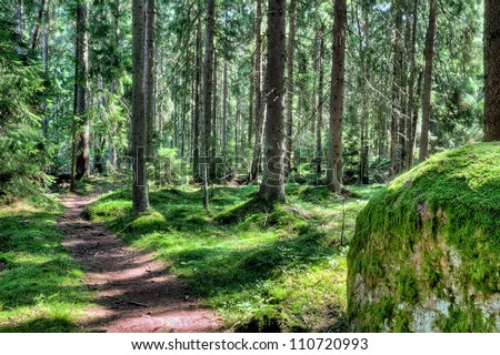 A footpath in a green magical forest landscape in the summer, in Finland Scandinavia - stock photo