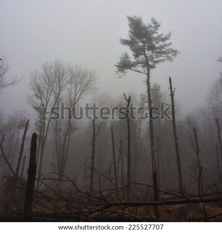 A forest covered in fog on an overcast day. - stock photo