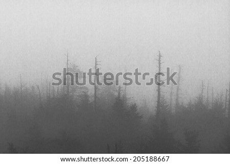 A forest in the fog.  Clingman's Dome, Great Smoky Mountains National Park, TN/NC, USA. - stock photo
