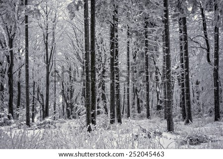 A forest in winter. - stock photo