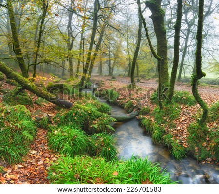 A forest stream winding it's way through misty trees at Golitha Falls on Bodmin Moor in Cornwall - stock photo
