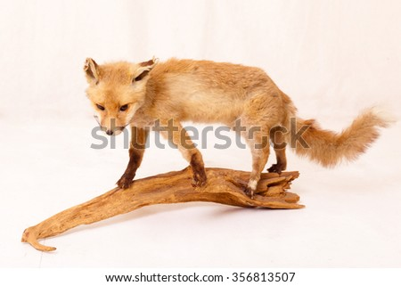 a fox on a piece of wood in the studio - stock photo