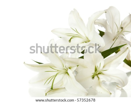 a fragment of white lilies ' bunch on a white background - stock photo