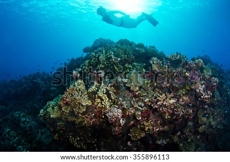 A freediver dives on the colorful reefs of Reunion Island in the Indian Ocean - stock photo