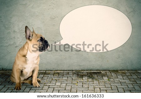 a French bulldog with a speech bubble - stock photo
