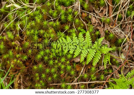 A freshly grown fern lays on the forest floor as Spring unfolds in the North Carolina woods. - stock photo