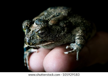 A frog on a finger - stock photo