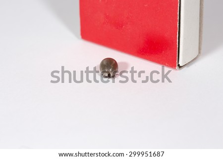 A fully grown Ixodes ricinus, the castor bean tick. It has been sucking blood around 3-4 days. A match box is for size reference. - stock photo