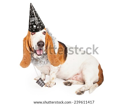 A fun Basset Hound dog wearing a black New Years Eve hat and party necklace - stock photo