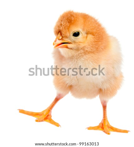 A funny chicken football - stock photo