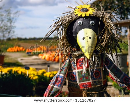 A funny looking scarecrow with beautiful pumpkins in the background - stock photo