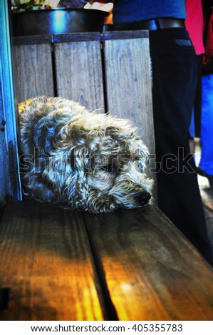 A furry dog resting sadly at a corner of a bench - stock photo