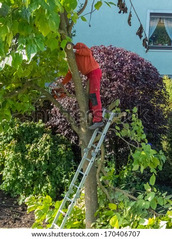 a gardener cuts around a tree. working in the garden. - stock photo