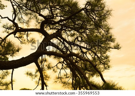 A giant tree at the sunset period. - stock photo