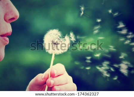 a girl blowing on a dandelion done with a vintage retro instagram filter - stock photo