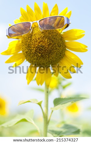 A glasses on sunflower - stock photo