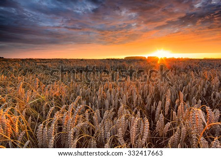 A golden glowing sunset over a field with dark clouds and a dramatic sun in the background - stock photo