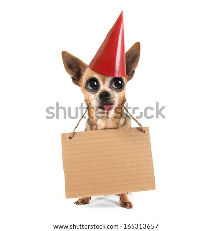 a goofy chihuahua holding a sign - stock photo