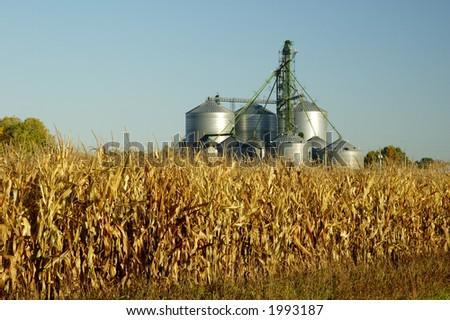 A grain elevator towers above a corn field  in South Dakota. - stock photo