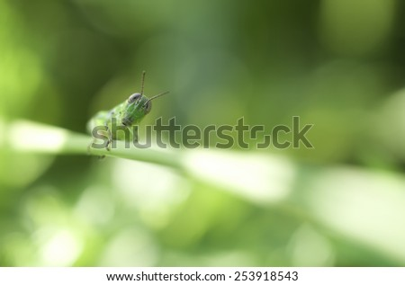 A grasshopper on a plant branch.  This is a closeup photograph taken at ground level. The de-focused lights are due to weak sun light coming in through grass. - stock photo