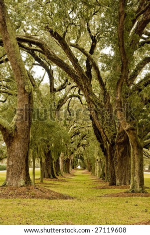 A grassy park overhanging with old southern oaks and spanish moss - stock photo