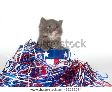 A gray kitten with red white and blue decorations for Fourth of July - stock photo