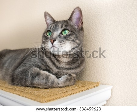 A gray striped tabby cat with big green eyes looks up - stock photo