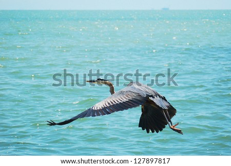 a great blue heron is flying over corpus christi bay - stock photo