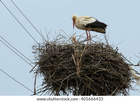 A great nest with couple of white storks in a springtime, harmony of nature - stock photo