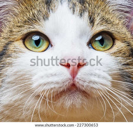 a green cat eyes close up - stock photo
