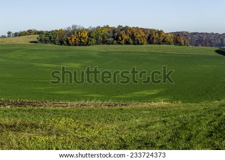 A green field with fall trees in the background - stock photo