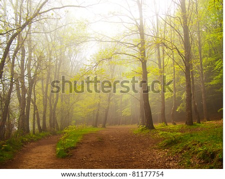 A green forest in spring covered by fog in the morning - stock photo